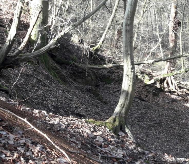 Waldhöhle