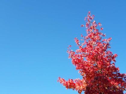 Herbstthings